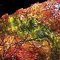 楓葉櫻花神社