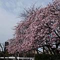 2012 0329~0411東京行