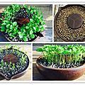 我的種子盆栽