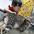寵物法鬥妃妃與虎斑貓棉棉