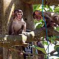 烏山彌猴保護區