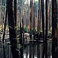 南投鹿谷忘憂森林
