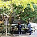 日本奈良東大寺&小鹿
