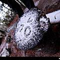雪訪 嘉明湖 雪地初體驗