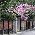 台南興南社區