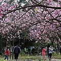 台南公園及東豐路花海