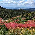 沖繩-1801