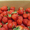 2009[大湖]採草莓