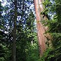 200506溫哥華之旅