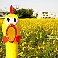 太陽麻與雞