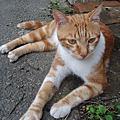 ˙巧遇的野貓˙