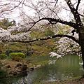 20090311東京出差、賞櫻(Tokyo,Japan)