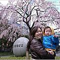桜お花見。趣旅行:東京【3日目】