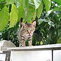 我家外面有老虎