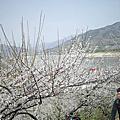 2012-03-30 全羅南道光陽梅花村