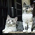 101.4.9新生小貓