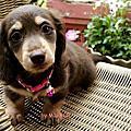 小笨狗-Pinky