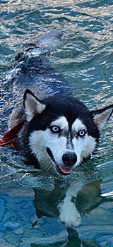 狗狗水世界。奔放去