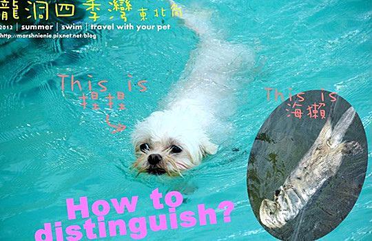 東北角海岸的寵物游泳池。龍洞四季灣