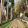 2011府城黃風鈴木