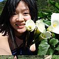 竹子湖  海芋的春天