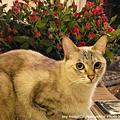貓比花嬌-Sora