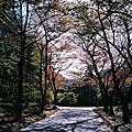 2009年1020-25日本遊-底片篇