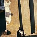 2009日本田代島-正片