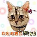 Miya大頭貼