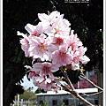 2013櫻花季