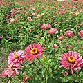 20121125橋頭美麗花朵