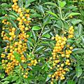 20120617金獅湖蝴蝶園
