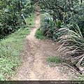 1010石雲森林步道-石灰坑山