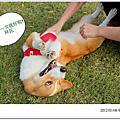 20121014 中壢綠風