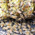 20050619 蜂