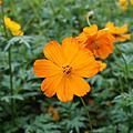 20051030 大溪花季