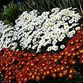20051120 士林官邸花展