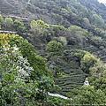 福建 泉州茗山清源茶院度假山莊