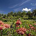 瑞穗棕櫚湖