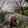 木場公園及河邊櫻花