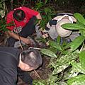 馬來西亞雨林