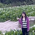 竹子湖&海芋