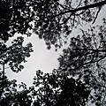 2014-01記˙與花樹自然相遇