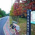 【龍潭】九龍自行車道騎車遇見落雨松