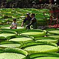 2017.08.12新北市怪獸島 植物園 雙溪公園