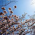 2012 【東京】千鳥ヶ淵
