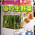 貓草種植紀錄