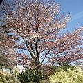 2013年4月15日東京自由行-第四天