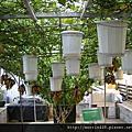 台灣植物工廠產業協會
