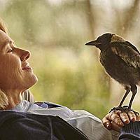 《希望鳥》,受傷的喜鵲,跟被困住的她。